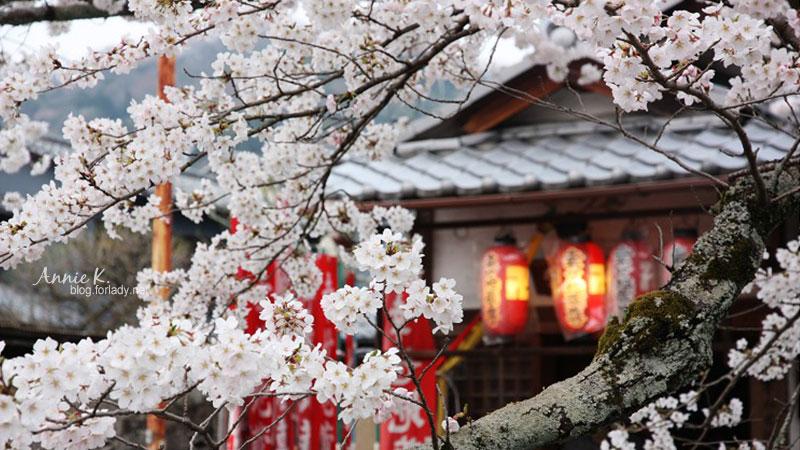 [櫻京阪 Day2-3] 哲學之道:一種融入生活的愜意。