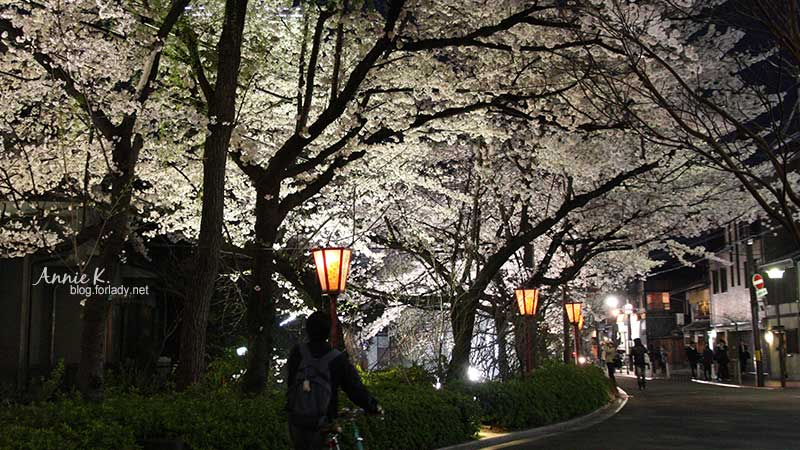 [櫻京阪 Day2-4]  木屋町通上的「小路櫻」風景