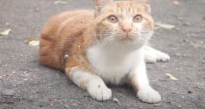 [阿妮在家] 散步遇到貓 (有影片)